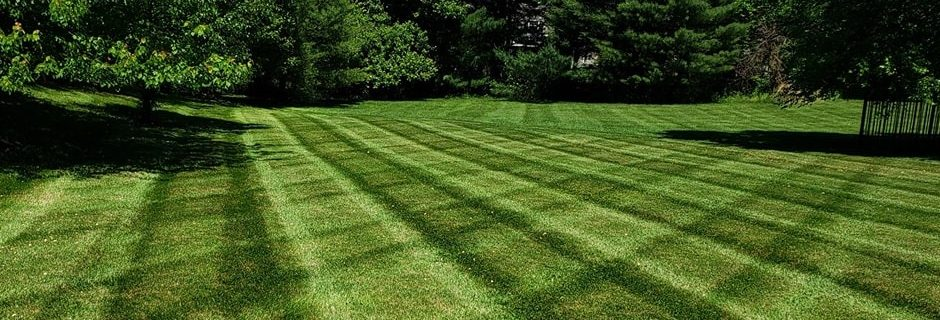 We are crazy about your lawn so you don't have to be.